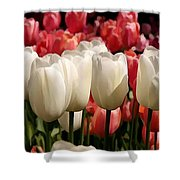 The Tulip Bloom Shower Curtain