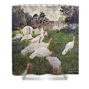 The Turkeys At The Chateau De Rottembourg Shower Curtain by Claude Monet