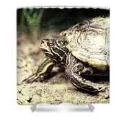 The Turtle Shower Curtain
