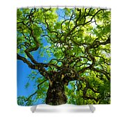 The Tuscan Tree Shower Curtain