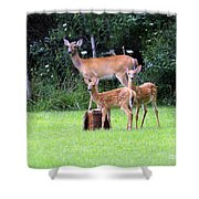 The Twins Shower Curtain by Kathy DesJardins