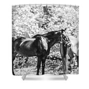 The Two Beauties Shower Curtain