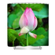 The Unfurling Shower Curtain