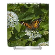 The Unnamed Butterfly Shower Curtain