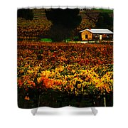 The Vines During Autumn Shower Curtain