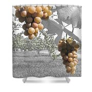 The Vineyard 2  Shower Curtain