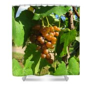 The Vineyard Shower Curtain