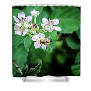 The Wasp Shower Curtain