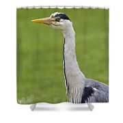 The Watchful Heron Shower Curtain