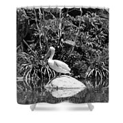 The Waterbirds Shower Curtain
