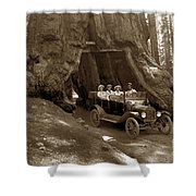 The Wawona Tree Mariposa Grove, Yosemite  Circa 1916 Shower Curtain