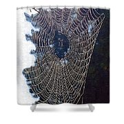 The Web Shower Curtain