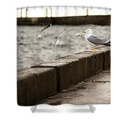 The White Bird Shower Curtain