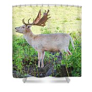The White Stag 2 Shower Curtain