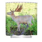 The White Stag 3 Shower Curtain