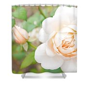 The White Washed Rose Shower Curtain