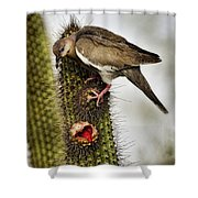 The White Winged Dove  Shower Curtain