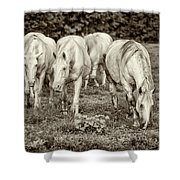 The Wild Horses Of Shannon County Mo 7r2_dsc1111_16-09-23 Shower Curtain
