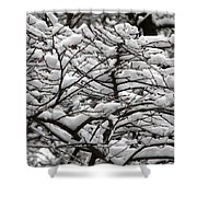The Winter Has Arrived Shower Curtain