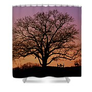 The Witness Shower Curtain