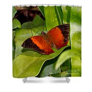 The Wizard Butterfly Shower Curtain