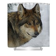 The Wolf 2 Shower Curtain