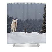 The Wolf Shower Curtain by Evgeni Dinev