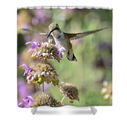 The Wonder Of Wings  Shower Curtain