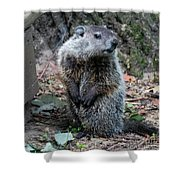 The Woodchuck Has To Pee Shower Curtain