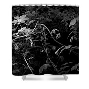 The World Of Vine Shower Curtain