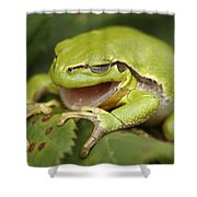 The Yawning Tree Frog Shower Curtain