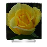 The Yellow Rose Of Texas Shower Curtain