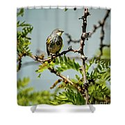 The  Yellow-rumped Warbler Shower Curtain