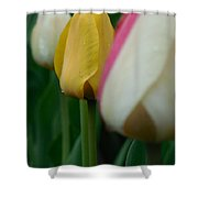 The Yellow Tulip Shower Curtain