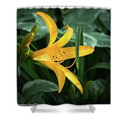 The Yelloy Lily Shower Curtain