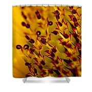 Then Comes The Seed Shower Curtain