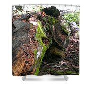 There Is Still Life Shower Curtain