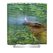 There She Blows Manatee Shower Curtain
