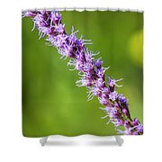 There You Are Blazing Star Shower Curtain