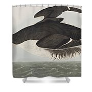 Thick-billed Murre Shower Curtain