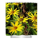 Thin-leaved Sunflower Shower Curtain