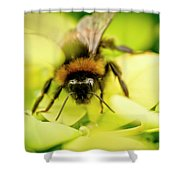 Thirsty Bumble Bee. Shower Curtain