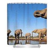 Thirsty Elephants Shower Curtain