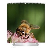 Thirsty For Nectar Shower Curtain
