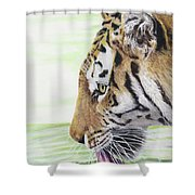 Thirsty Tiger Shower Curtain