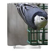 This Is My Suet Shower Curtain