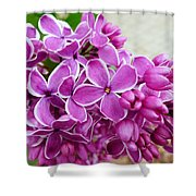 This Lilac Has Flowers With A White Edging. 4  Shower Curtain