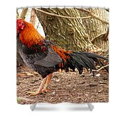 This One's Not For Dinner Shower Curtain