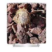 Thistle Fractures Shower Curtain