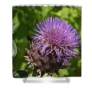 Thistle In Bloom Shower Curtain